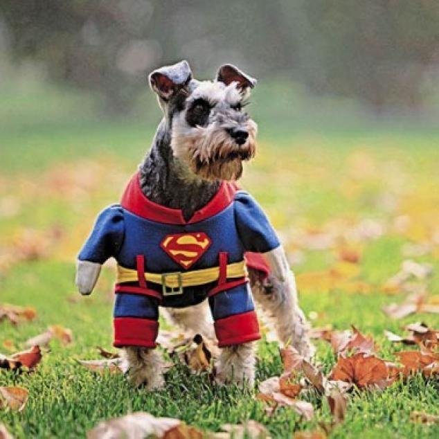 Wenskaart Super Hond.
