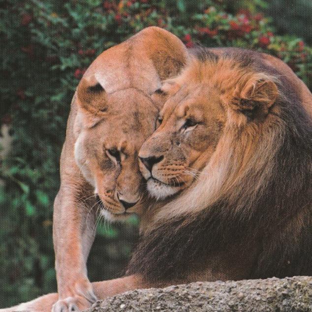 Ansichtkaart Leeuwen.