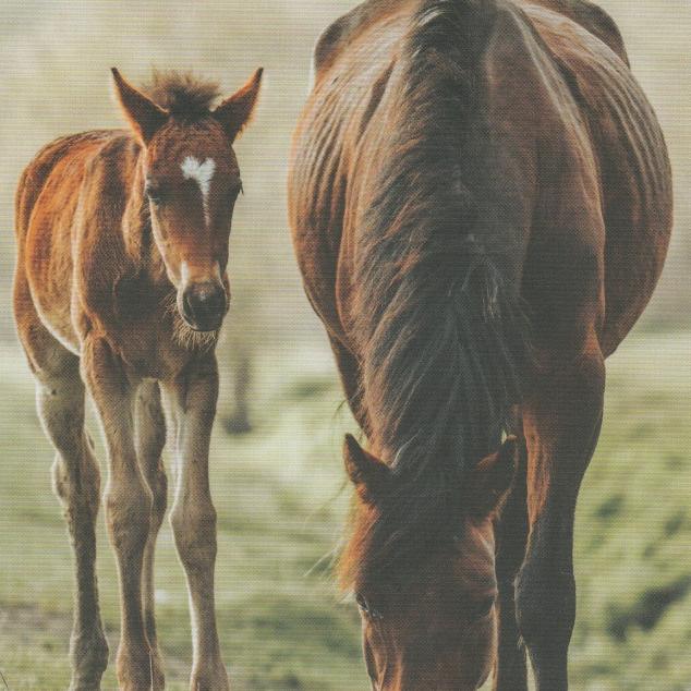 Ansichtkaart Samen met Mams.