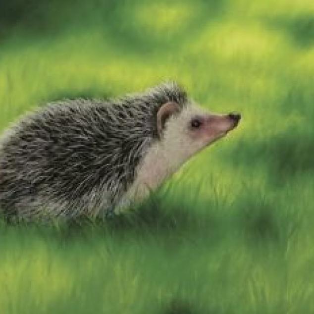 Ansichtkaart Egeltje in het Gras.