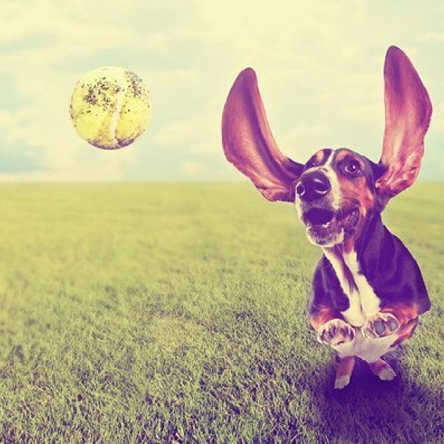 Ansichtkaart Hond.