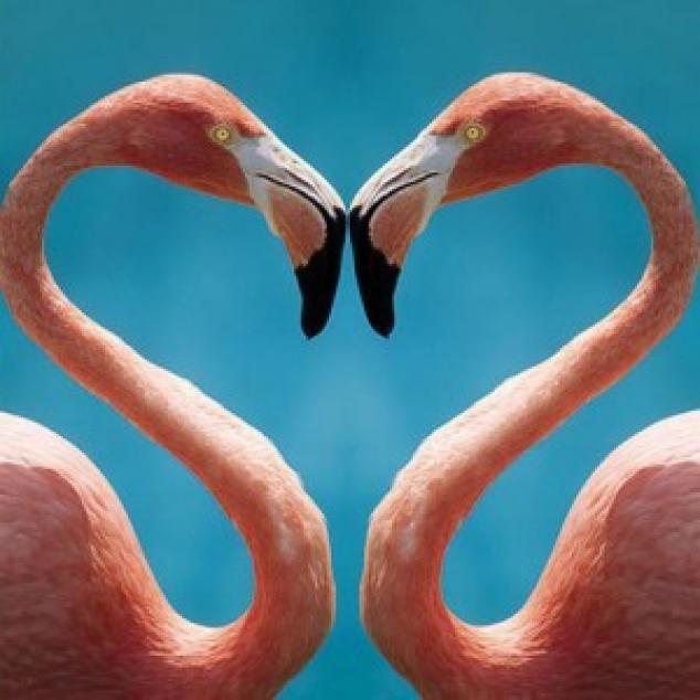 Wenskaart Flamingo's.