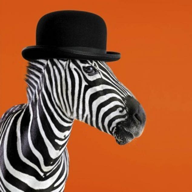 Wenskaart, Engelse Zebra.