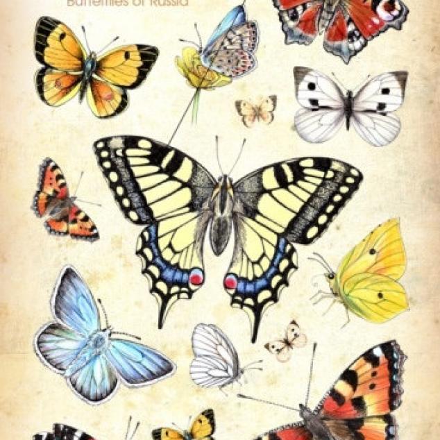 Ansichtkaart, Russische Vlinders.