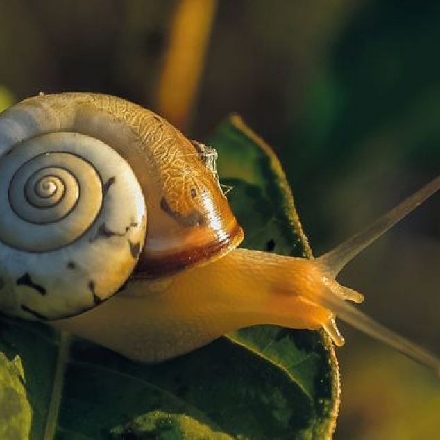 Ansichtkaart SnailMail in het Echt.