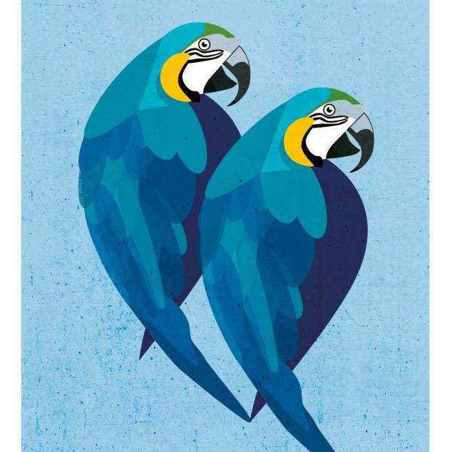 Ansichtkaart Papagaaien.