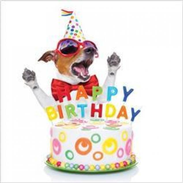 Wenskaart Happy Birthday, blij hondje.