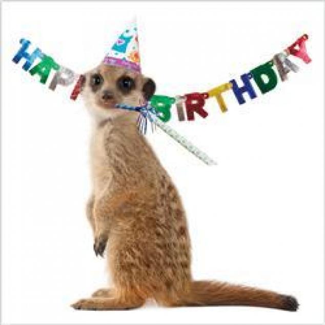 Wenskaart Happy Birthday Stokstaartje.
