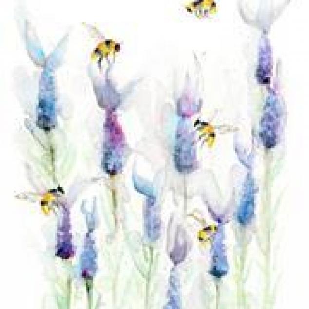 Wenskaart, Bijen snoepen van Lavendel.
