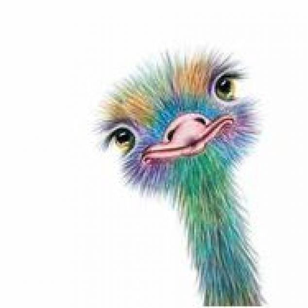 Ansichtkaart Struisvogel.