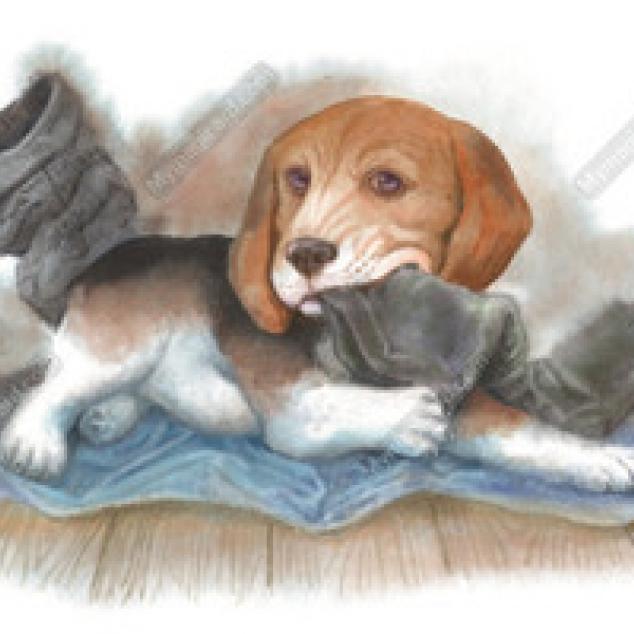 Ansichtkaart Beagle kauwt op baasjes laars.