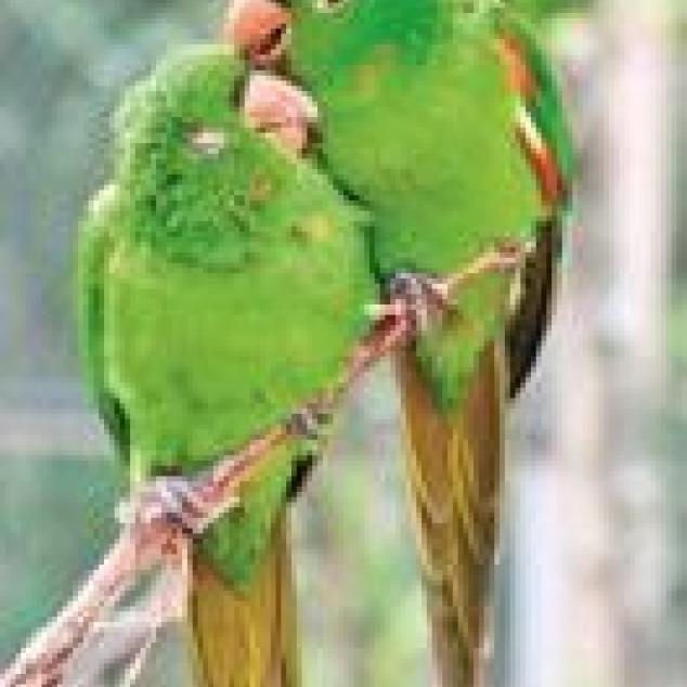 Ansichtkaart Tallie's Vogeltjes.