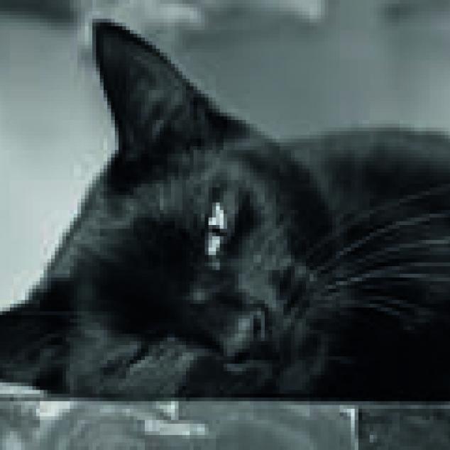 Ansichtkaart Zwarte Kat.